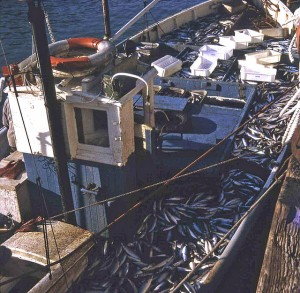Over-fishing is one of the primary concerns in terms of humankind's impact on the sustainability of sea life.
